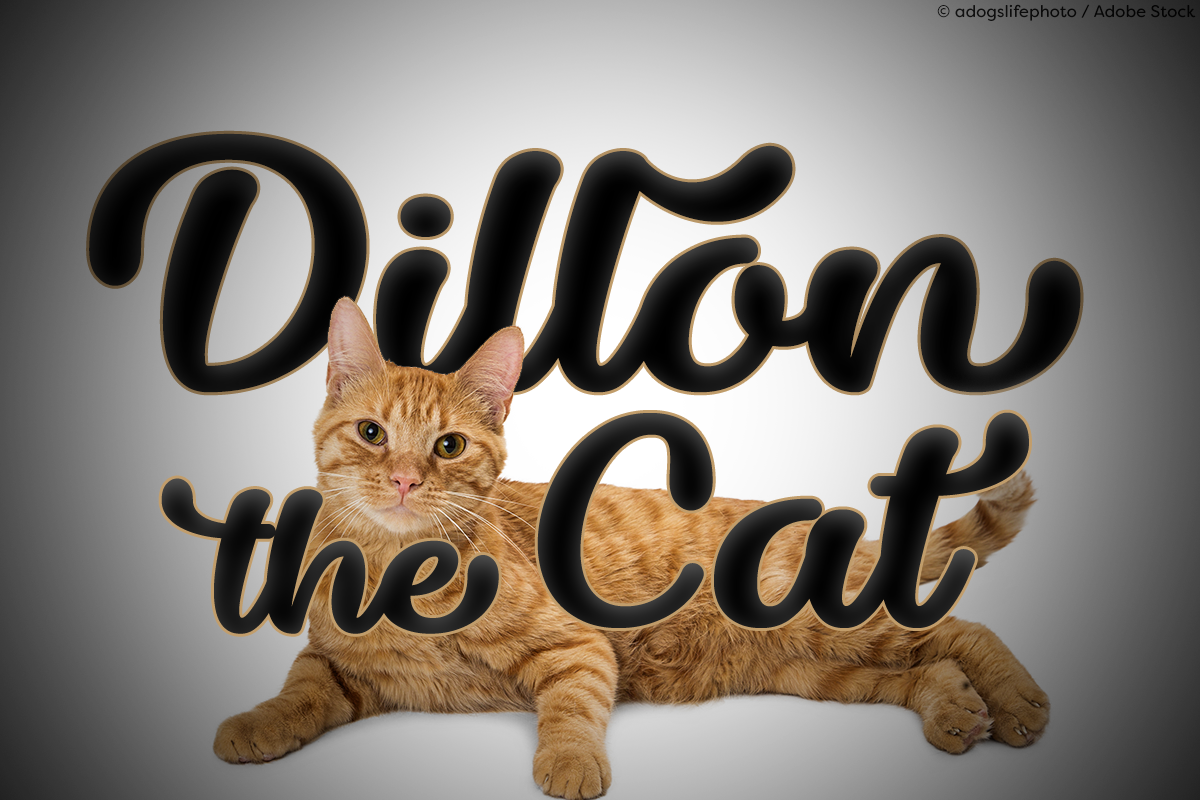 Dillon the Cat by Misti's Fonts. Image credit: © adogslifephoto / Adobe Stock